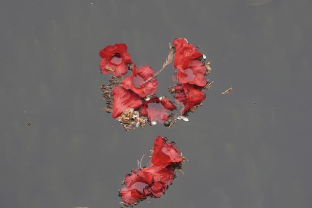 Red Petals 2