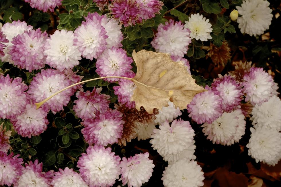 Leaf on flowers